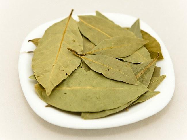 Сонник лавровый лист зеленый