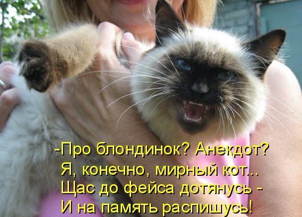 Анекдот Про Котика