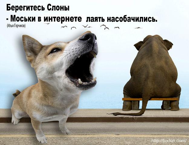 http://f1.mylove.ru/DSGm922Yuz.jpg