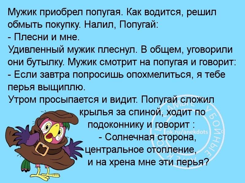 Анекдот Про Попугая