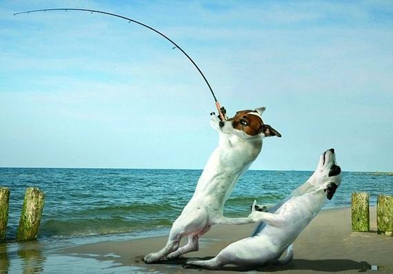 начинающий рыбак поймал рыбу