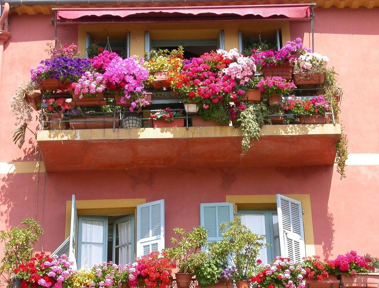 Цветы на балконе (75 фото): балконные ящики с вьющимися раст.