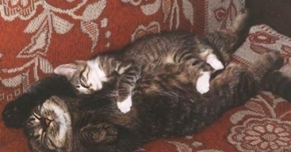 Если снится дохлая кошка