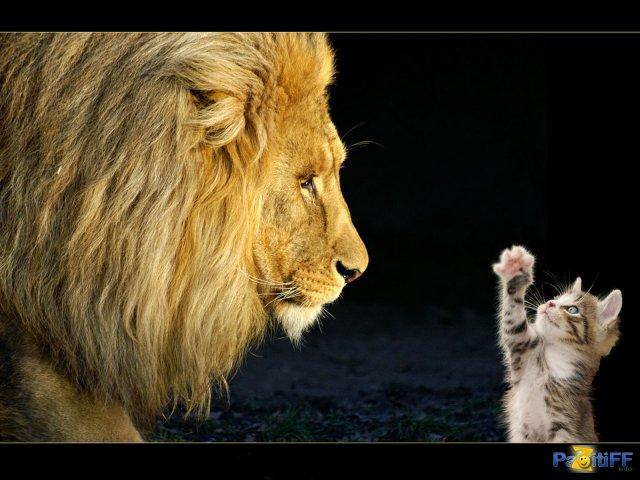 Лев и котенок картинки