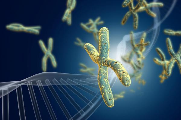 Мутация в 16-й хромосоме снижает уровень IQ на 25 баллов