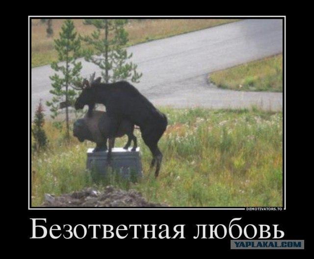 секс знакомства в дмитров россия