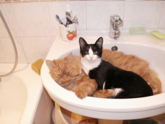 Nope cat bathtub