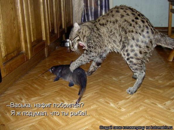 Купить кота камышового в москве