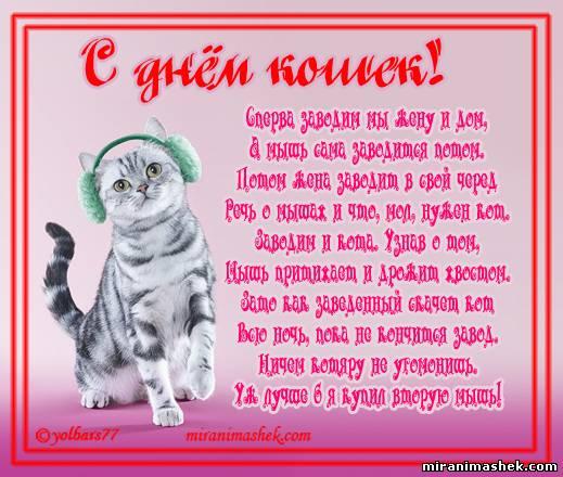 Поздравление с днём кошек в прозе