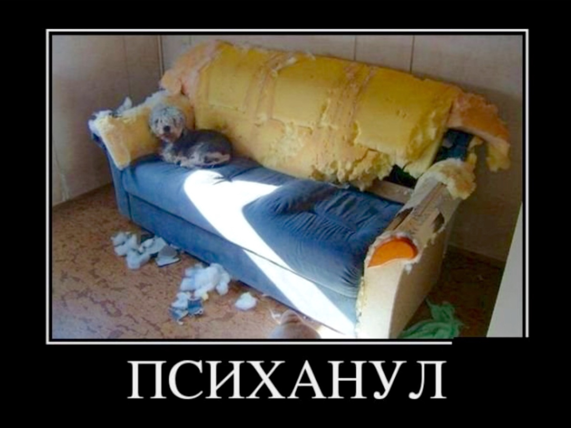 """Прикольные картинки пятницы """" ucrazy.ru - источник хорошего ."""