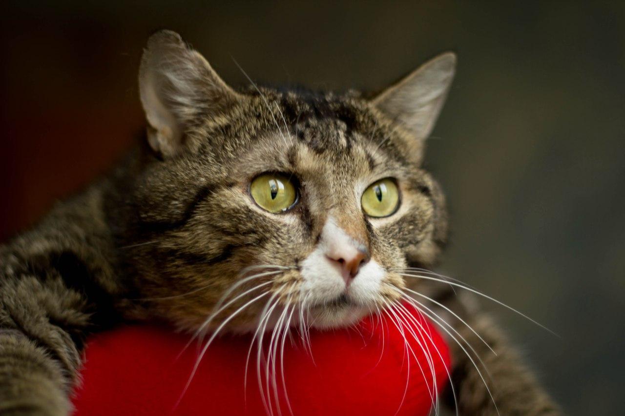 Прикольная картинка кот который размышляет, дня картинки