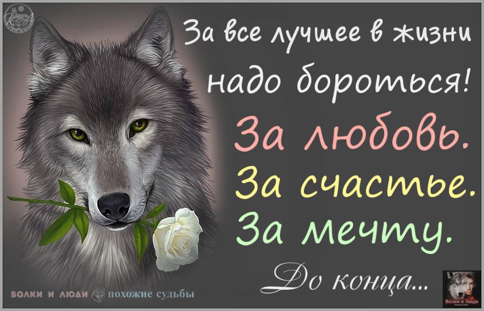 Поздравлением, красивые открытки с волками с цитатами