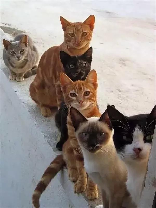 Картинки про кошек с надписями с юмором