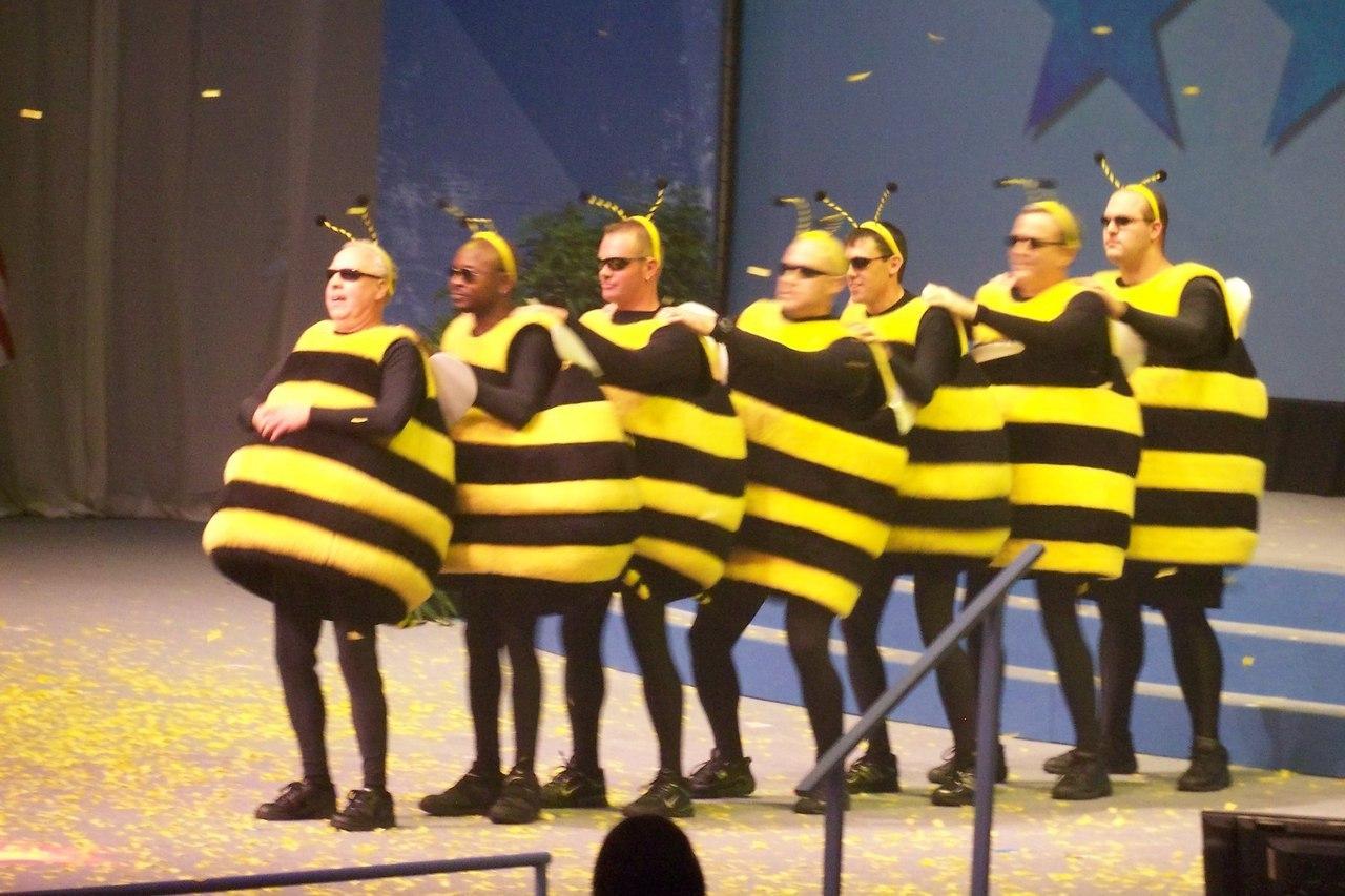 как смешное фото пчелки услуга прекрасно