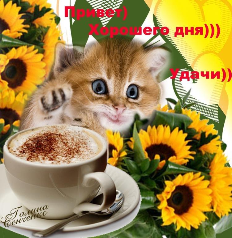 Смысле жизни, красивые картинки с животными с добрым утром и хорошего дня