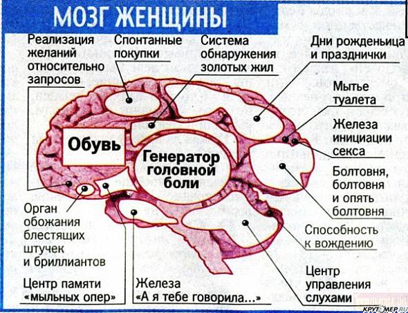 Смешные картинки мозг женщины, для крестных