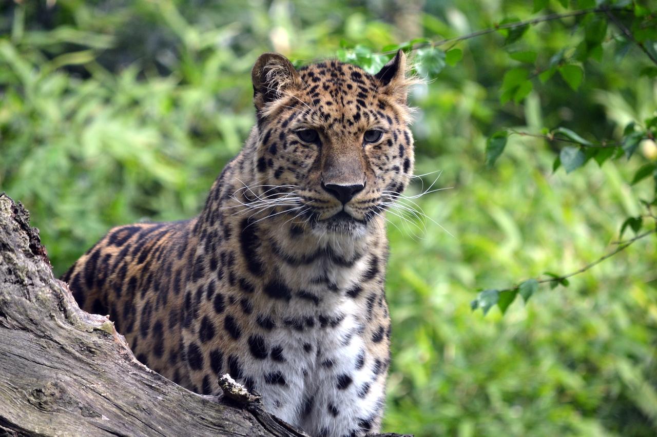 животные дальнего востока картинки с названиями расчета стоимости