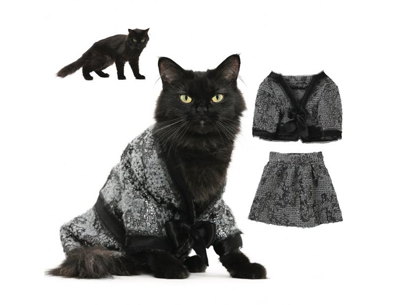 укладка картинки кошек на одежде частности