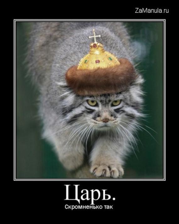 Яндекс днем, я царь смешные картинки