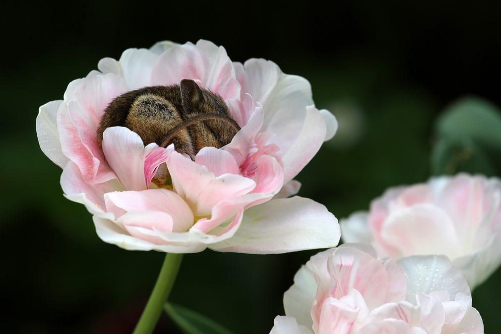 первую картинка спящего цветка бомбануло, просто