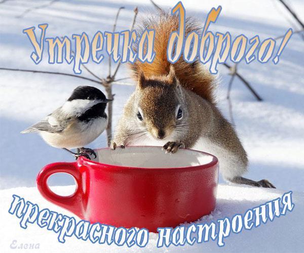 Для коми, доброго зимнего утра мой львенок открытка с текстом