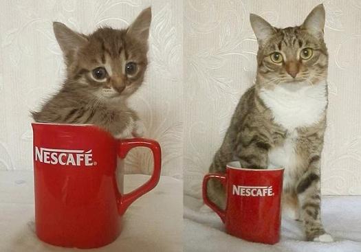 Кот подрос